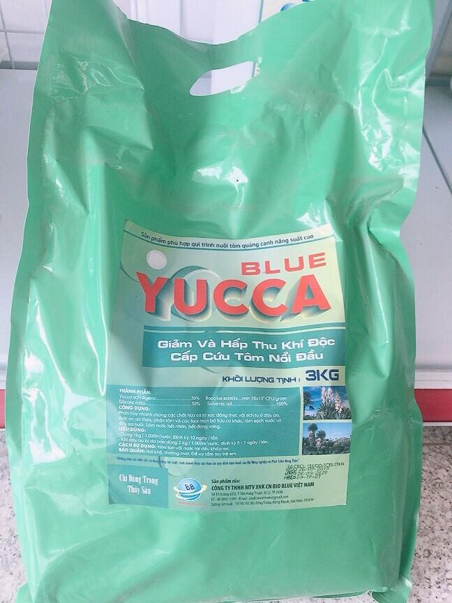 Blue Yucca