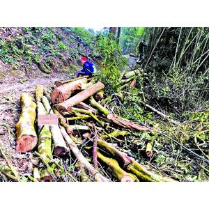Báo Phụ Nữ điều tra độc quyền: Sun Group, Địa Ngục Tự và ma trận chiếm lĩnh rừng quốc gia Tam Đảo