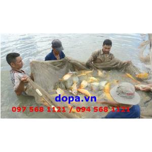 Bệnh Cá, Các Bệnh Thường Gặp Trên Cá Nước Ngọt Và Biện Pháp Phòng Trị