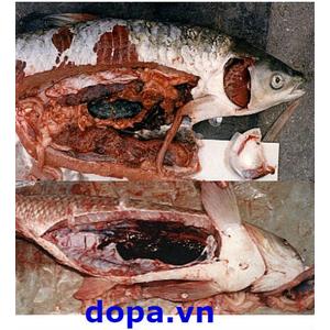 Bệnh Cá Trắm Cỏ, Các Bệnh Thường Gặp Và Biện Pháp Phòng Trị