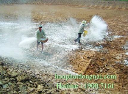 Vi sinh khử phèn, cải tạo đất trồng HPDON-KPN