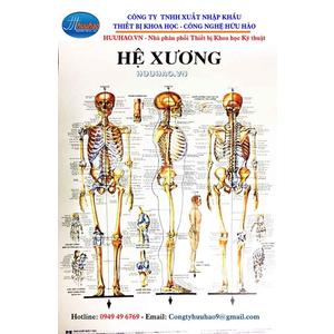 Bộ tranh giải phẫu hệ xương 13 tờ