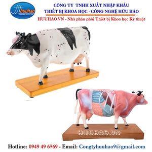 Mô hình thực hành châm cứu gia súc, trâu, bò