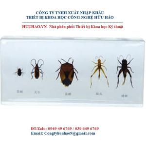 Mô hình 5 loại côn trùng gây hại
