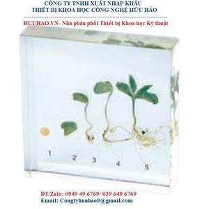 Mô hình sự phát triển cây đậu tương