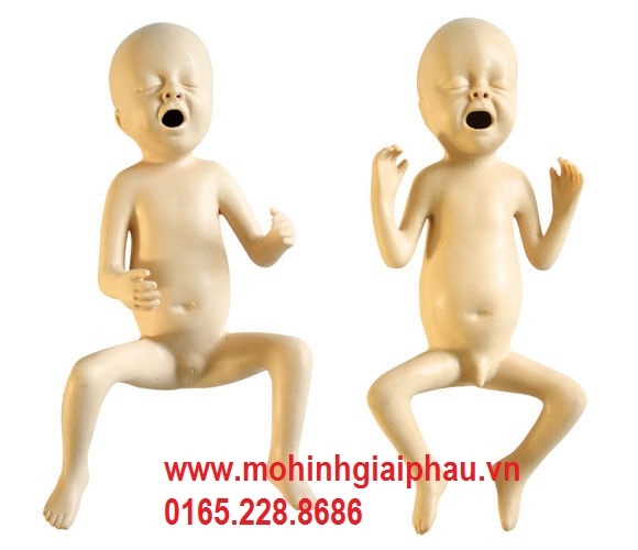 Mô hình chăm sóc trẻ sơ sinh thiếu tháng HHFT331