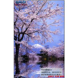 Gạch 3d Hoa Anh Đào HAD24