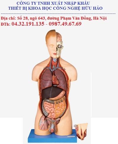 Mô hình giải phẫu Phủ tạng tháo dời GD/A10002