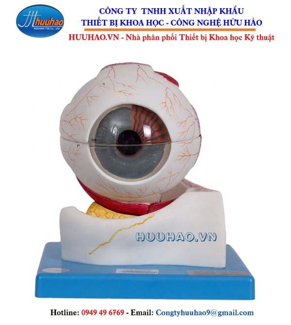 Mô hình giải phẫu mắt và nhãn cầu GD/A17103