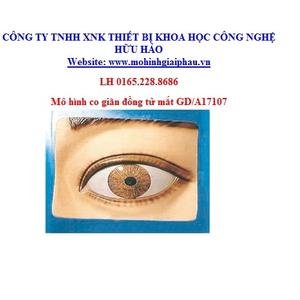 Mô hình về co giãn đồng tử mắt GD/A17107