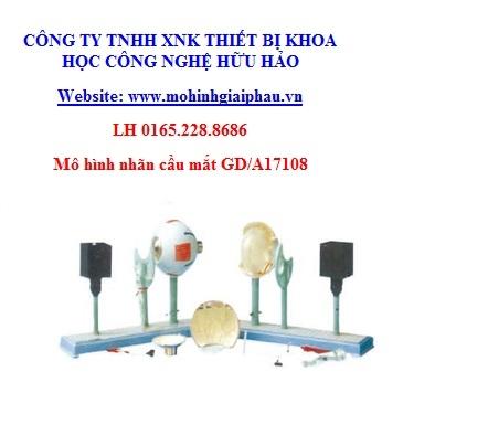 Mô hình nhãn cầu mắt GD/A17108
