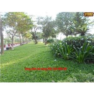 Hoa cỏ sân vườn HCSV06