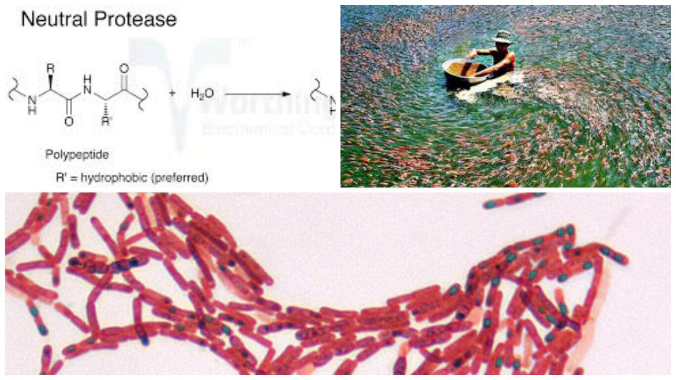 Vi sinh tiêu hóa bố sung dinh dưỡng khẩn cấp HPDON-GP (Dạng lỏng)