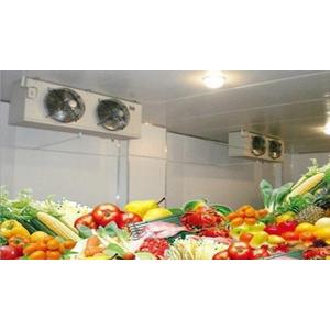 Kho lạnh bảo quản rau quả