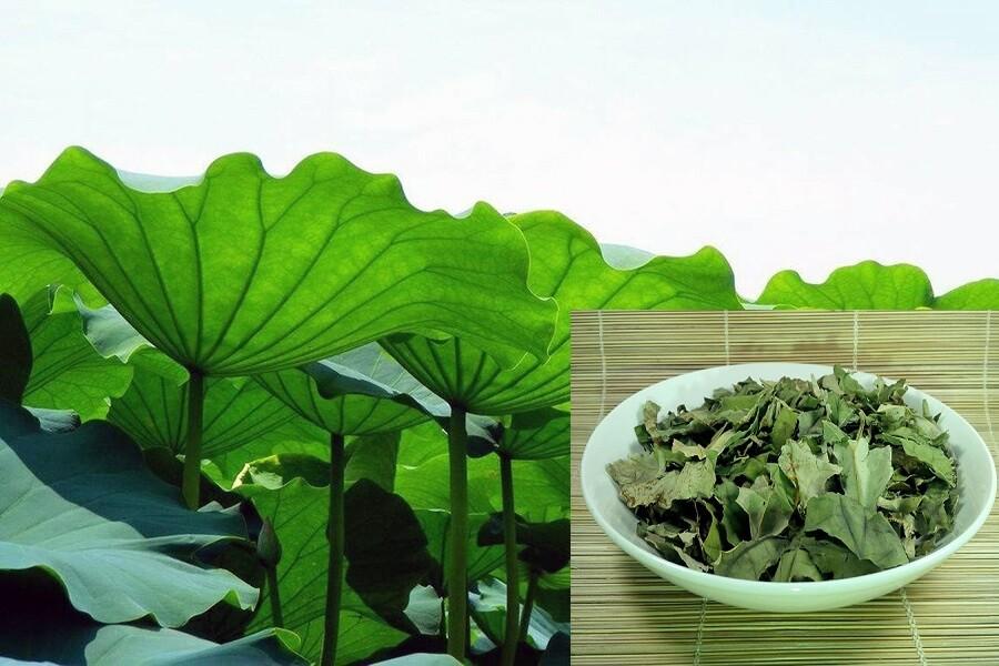 Trà lá sen và cách dùng hiệu quả nhất