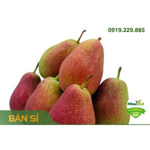 LÊ NAM PHI (thùng 12.5kg)