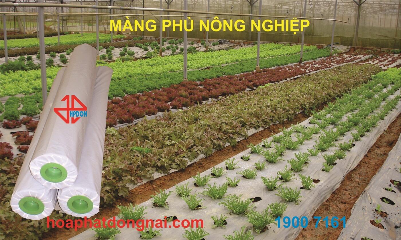 Màng phủ nông nghiệp HPDON