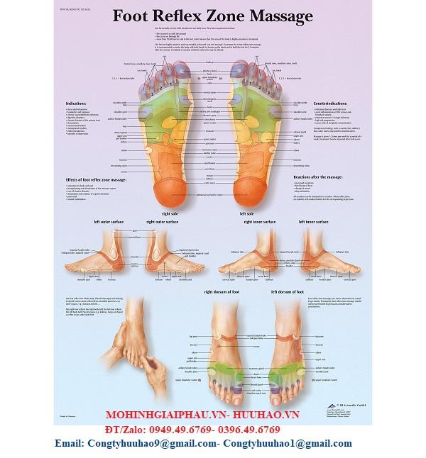 Biểu đồ massage vùng phản xạ bàn chân