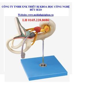 Mô hình đường rối tai trong GD/A17205