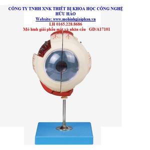 Mô hình giải phẫu mắt và nhãn cầu GD/A17101