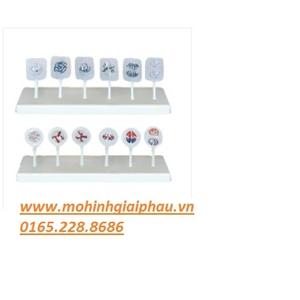 Mô hình sự phân bào động vật và thực vật