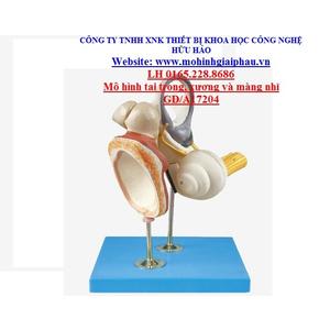 Mô hình tai trong, xương tai giữa và màng nhĩ GD/A17204