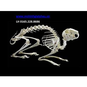 Mô hình xương thỏ