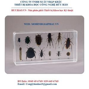 Mô hình 6 côn trùng có hại và 6 côn trùng có ích
