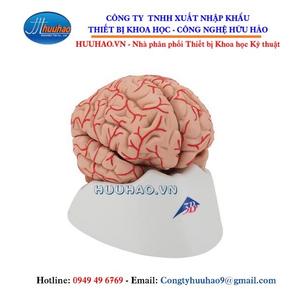 Mô hình bộ não 9 phần