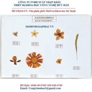 Mô hình các mẫu cánh hoa