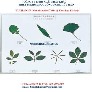 Mô hình các mẫu lá cây