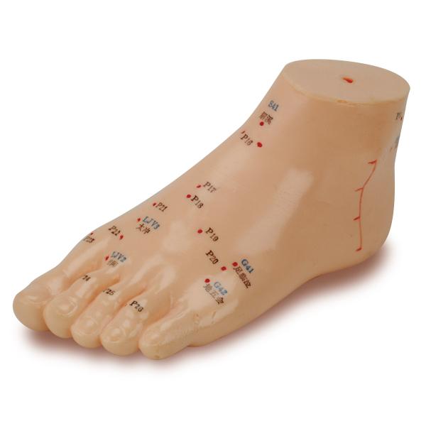 Mô hình châm cứu bàn chân