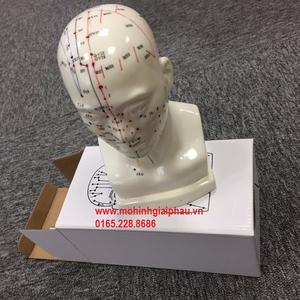 Mô hình châm cứu đầu HHXY1012