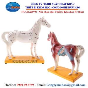 Mô hình thực hành châm cứu ngựa