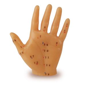 Mô hình châm cứu bàn tay