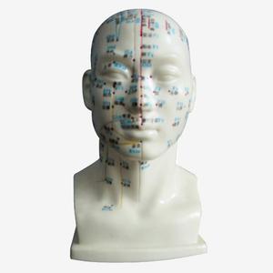 Mô hình châm cứu vùng đầu