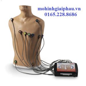 Mô hình điện tim 15 đạo trình