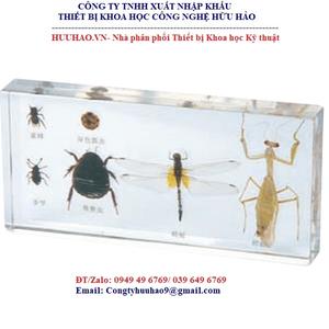 Mô hình giải phẫu 6 loại côn trùng