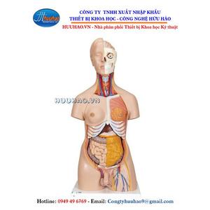 Mô hình giải phẫu bán thân 20 phần
