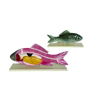 Mô hình giải phẫu cá 2 phần