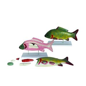 Mô hình giải phẫu cá 7 phần