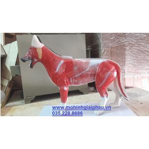 Mô hình giải phẫu cơ thể chó SMRL601