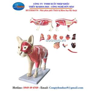 Mô hình giải phẫu cơ thể mèo
