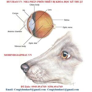 Mô hình giải phẫu mắt chó