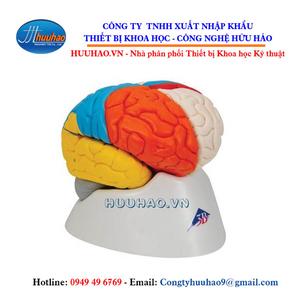Mô hình giải phẫu não người 8 phần