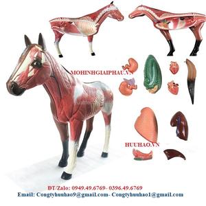 Mô hình giải phẫu ngựa