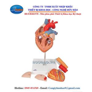 Mô hình giải phẫu tim 5 phần