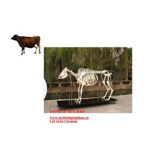 Mô hình giải phẫu xương gia súc