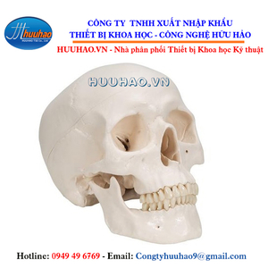 Mô hình giải phẫu xương sọ 3 phần