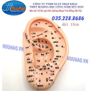 Mô hình huyệt vị tai